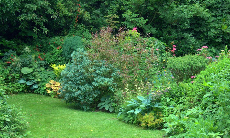 Bloemen en planten harry pierik tuinontwerp - Tuin ontwerp tijdschrift ...