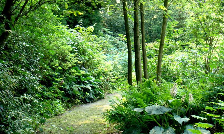 Bostuin in de buurt van hattem harry pierik tuinontwerp for Schaduw een terras
